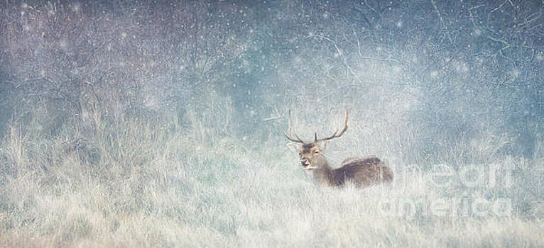 LHJB Photography - Deer in winter scene