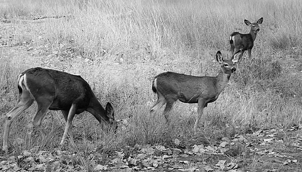 Deer by Julie Lourenco