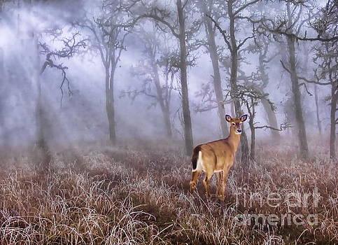 Deer Me by Andrea Kollo