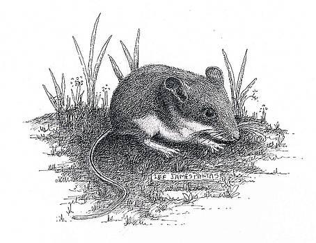 Lee Pantas - Deer Mouse