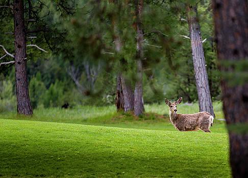 Darcy Michaelchuk - Deer on Alert