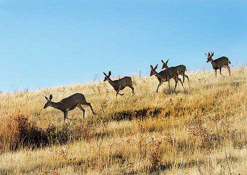 Deer on the run by Roy Nierdieck