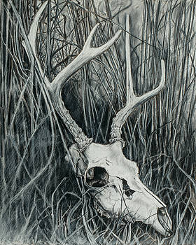 Deer Skull by Tosha Wise