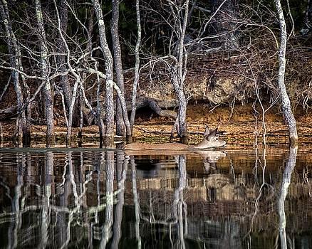 Deer Swim by Alan Raasch