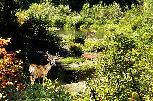 Deer Trail To The River by Diane Schuster