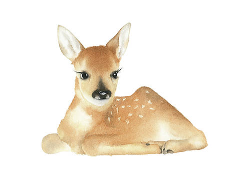 Baby Deer Watercolor by Taylan Apukovska