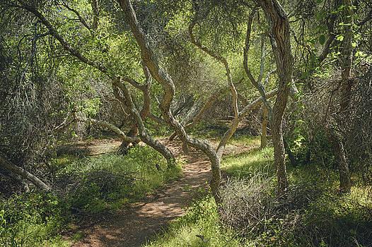 Del Mar Mesa - Elfin Forest Trail by Alexander Kunz