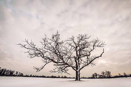 Chris Bordeleau - Delaware Park Winter Oak - Color