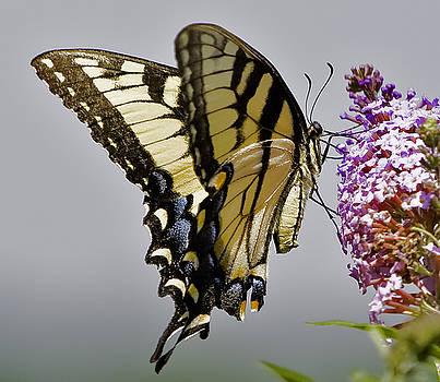 Delicate Beauty by John Holloway