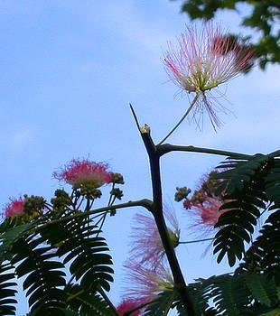 Anne Cameron Cutri - Delicate Blossom