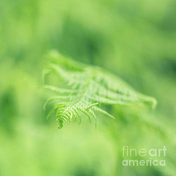 Delicate Fern - Hipster Photo Square by Charmian Vistaunet