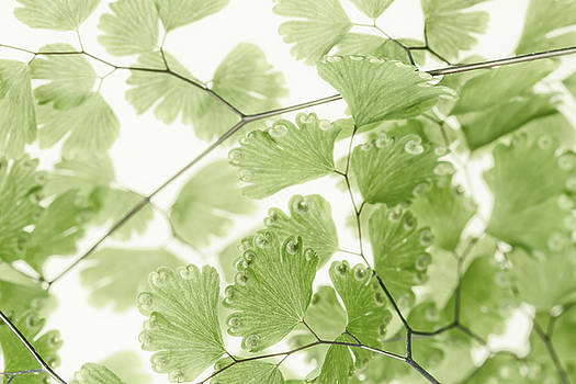 Sandra Foster - Delicate Fern Leaves