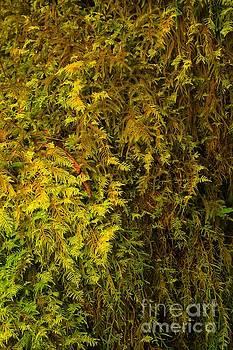 Adam Jewell - Delicate Ferns