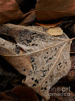 Delicate Lace by Robert Ball