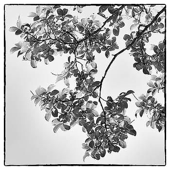 Delicate Leaves by Georgette Grossman