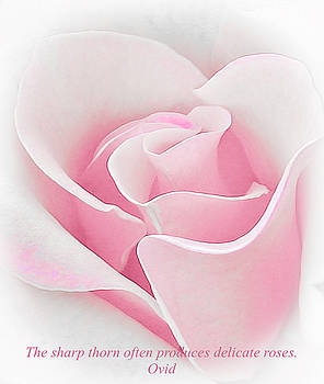 Venetia Featherstone-Witty - Delicate Pink Rose
