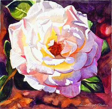 David Lloyd Glover - Delicate Princess Rose