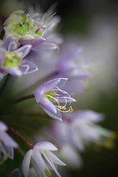 Delicate Purple Flowers by Brooke T Ryan
