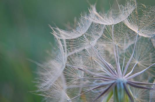 Delicate Seeds by Amee Cave