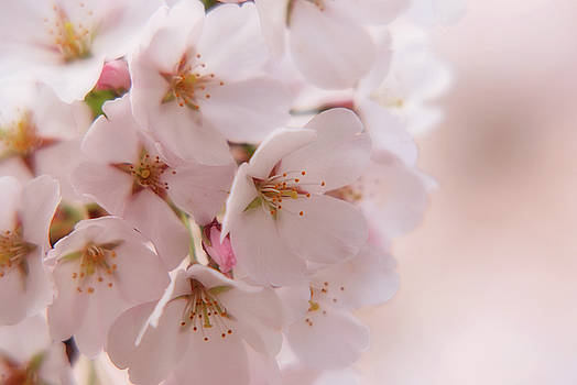 Delicate Spring Blooms by Angie Tirado