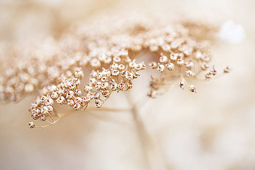 Delicate spring flower  by Carol Mellema