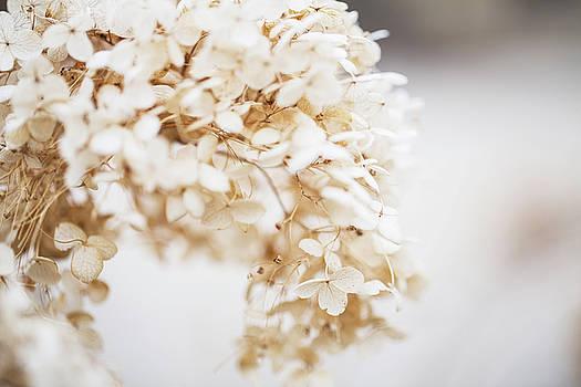 Delicate Spring Flower In Bloom by Carol Mellema