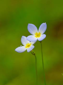 Delicate Wildflower Pair by Scott Leslie