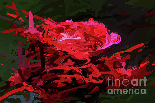 Delicious Abstract Red Rose by Clive Littin