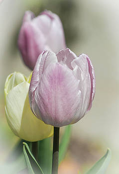 Delightful and Delicate by ArtissiMo Photography