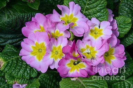 Delightful Spring by Kathleen Struckle