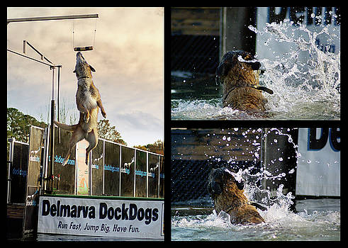 Delmarva DockDogs - Collage by Brian Wallace