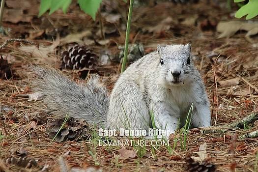 Delmarva Fox Squirrel 3809 by Captain Debbie Ritter