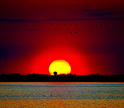 Delmarva May Sunset by William Bartholomew