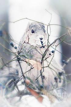 Michael McStamp - Delmarva Peninsula Fox Squirrel I