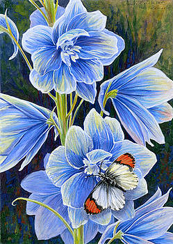 Delphinium and Sara Orange Tip by Shari Erickson