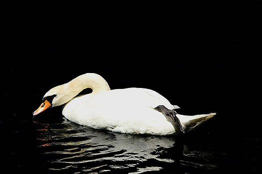Debbie Oppermann - Demure Swan