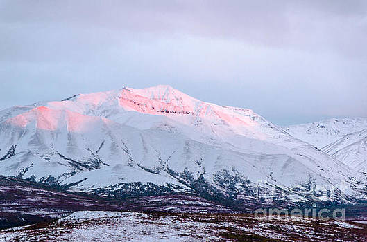 Denali - Alpenglow 2 by Mary Carol Story