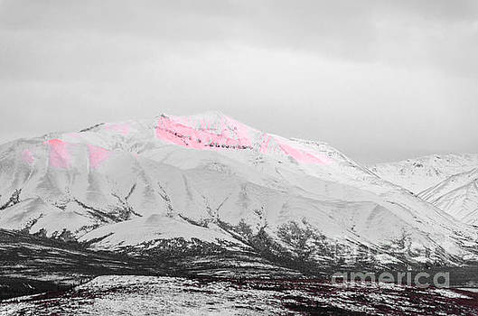 Denali - Alpenglow 2 SC by Mary Carol Story