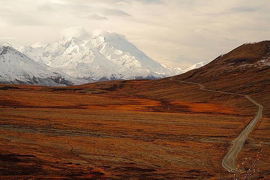 Denali And Tundra In Autumn by Steve Wolfe