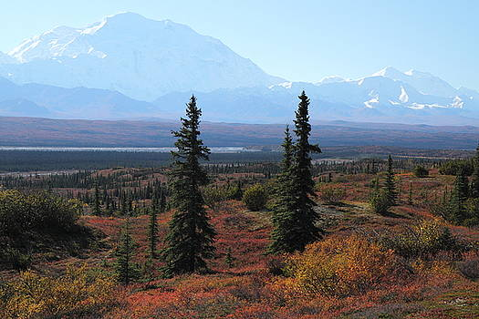 Denali From Near Wonder Lake by Steve Wolfe