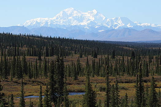 Denali From The Denali Highway by Steve Wolfe