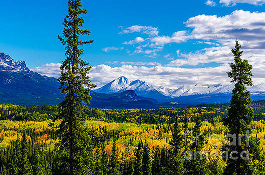 Denali - Golden Valley 4 by Mary Carol Story
