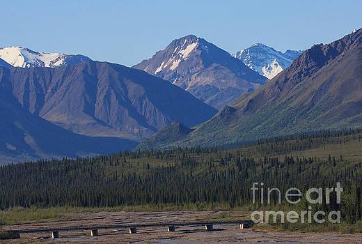 Denali Mountain View by Robert Pilkington