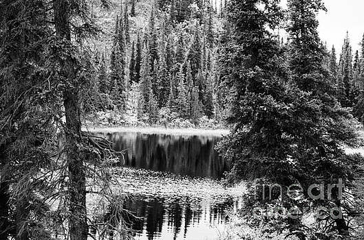 Denali - Reflections in a Pond BW by Mary Carol Story