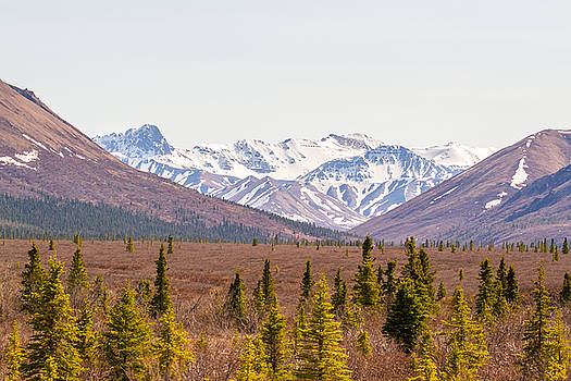 Allan Levin - Denali Wilderness Beauty