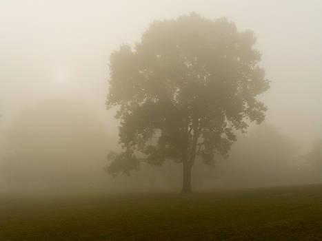 Dense Fog by Andrew Kazmierski