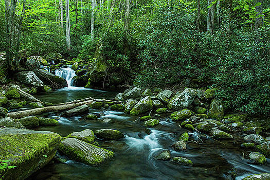 Dense Forest And Waterfall Smoky Mountains Tennessee by Carol Mellema