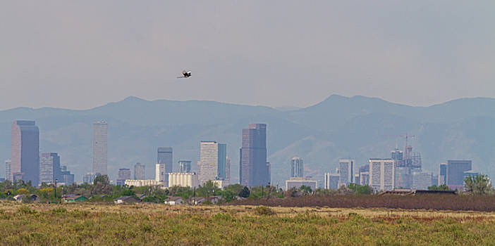 Denver Colorado Pretty Bird Fly By by James BO Insogna