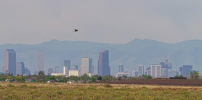 Denver Colorado Pretty Bird Fly By by James BO Insogna