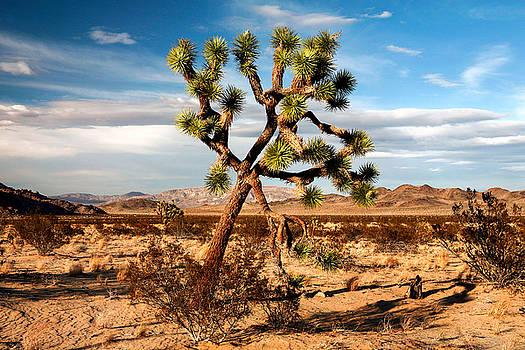 Desert Beauty by Lon Casler Bixby
